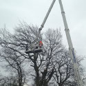 Specialist tree surgeon